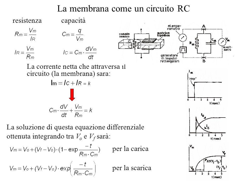 La membrana come un circuito RC resistenzacapacità La corrente netta che attraversa il circuito (la membrana) sara: La soluzione di questa equazione d