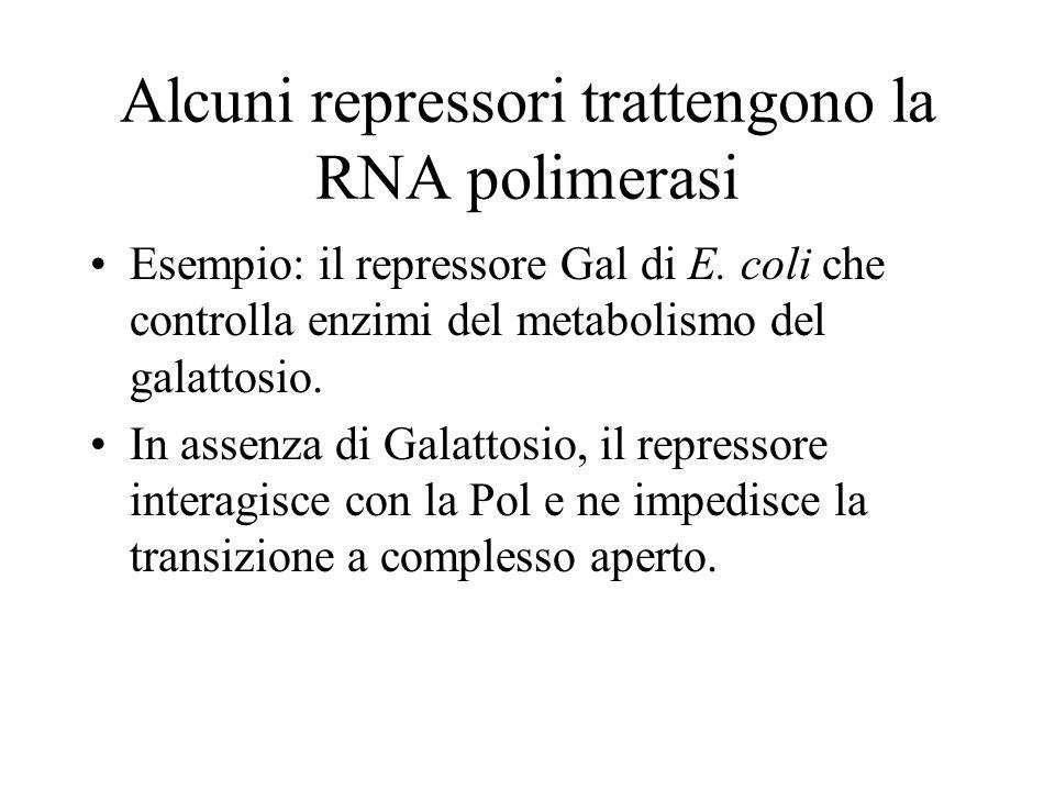 Alcuni repressori trattengono la RNA polimerasi Esempio: il repressore Gal di E. coli che controlla enzimi del metabolismo del galattosio. In assenza