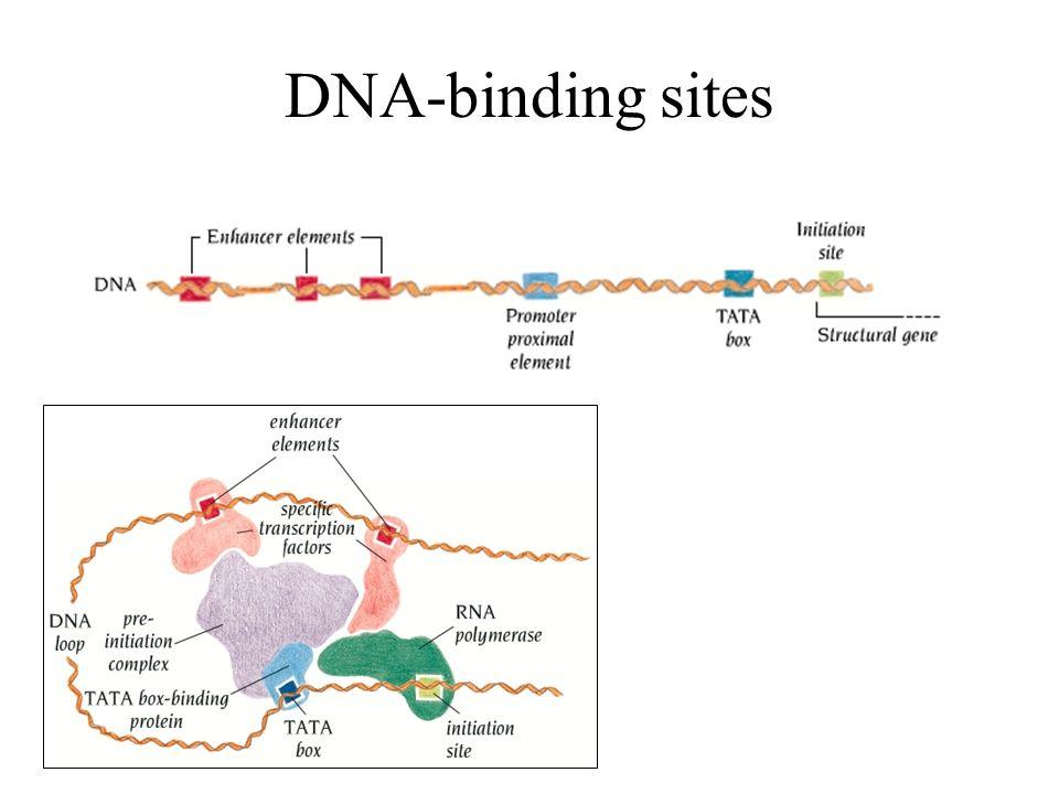 DNA-binding sites
