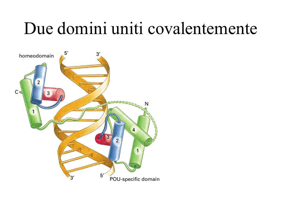 Due domini uniti covalentemente