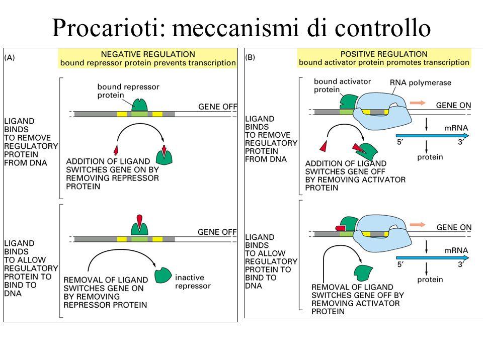 Procarioti: meccanismi di controllo