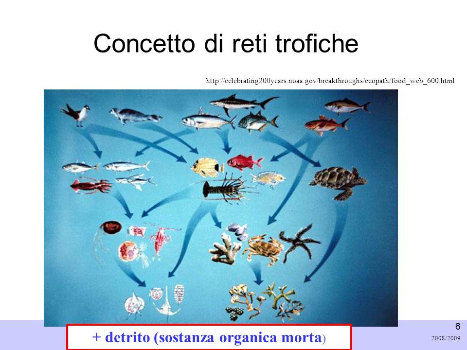 Università di Padova LASA – Laboratorio di Analisi dei Sistemi ambientali Ingegneria Chimica Ambientale 6 2008/2009 Concetto di reti trofiche + detrit