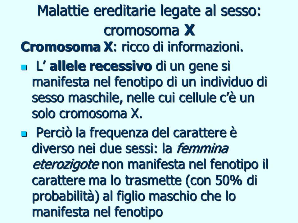 Malattie ereditarie legate al sesso: cromosoma X Cromosoma X: ricco di informazioni. L allele recessivo di un gene si manifesta nel fenotipo di un ind