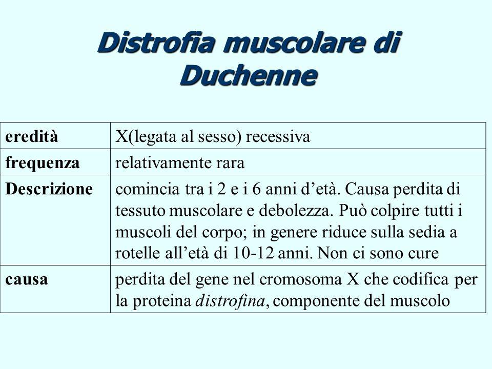 Distrofia muscolare di Duchenne eredità X(legata al sesso) recessiva frequenza relativamente rara Descrizione comincia tra i 2 e i 6 anni detà. Causa