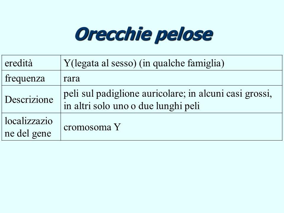 aneuploidie Variazione nel numero di cromosomi Polisomia: cromosomi presenti in più di 2 copie Polisomia: cromosomi presenti in più di 2 copie Aploidia: cromosomi rappresentati da una sola copia Aploidia: cromosomi rappresentati da una sola copia Possono interessare sia gli autosomi sia i cromosomi sessuali Sono conseguenza di non disgiunzione dei cromosomi omologhi durante la meiosi Non disgiunzione numero di cromosomi