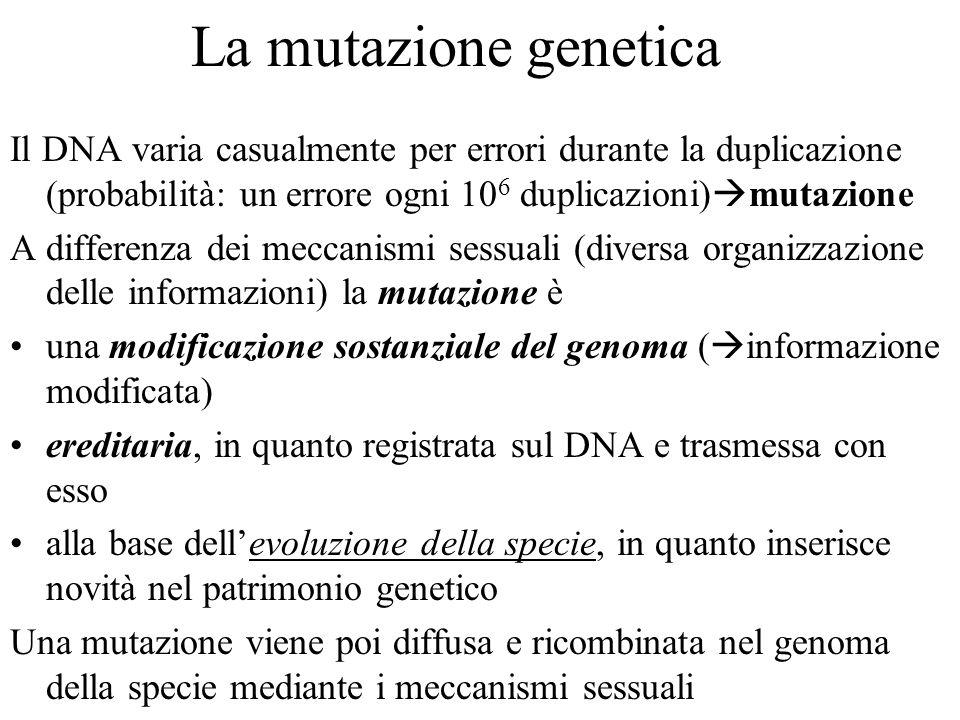 La mutazione genetica Il DNA varia casualmente per errori durante la duplicazione (probabilità: un errore ogni 10 6 duplicazioni) mutazione A differen