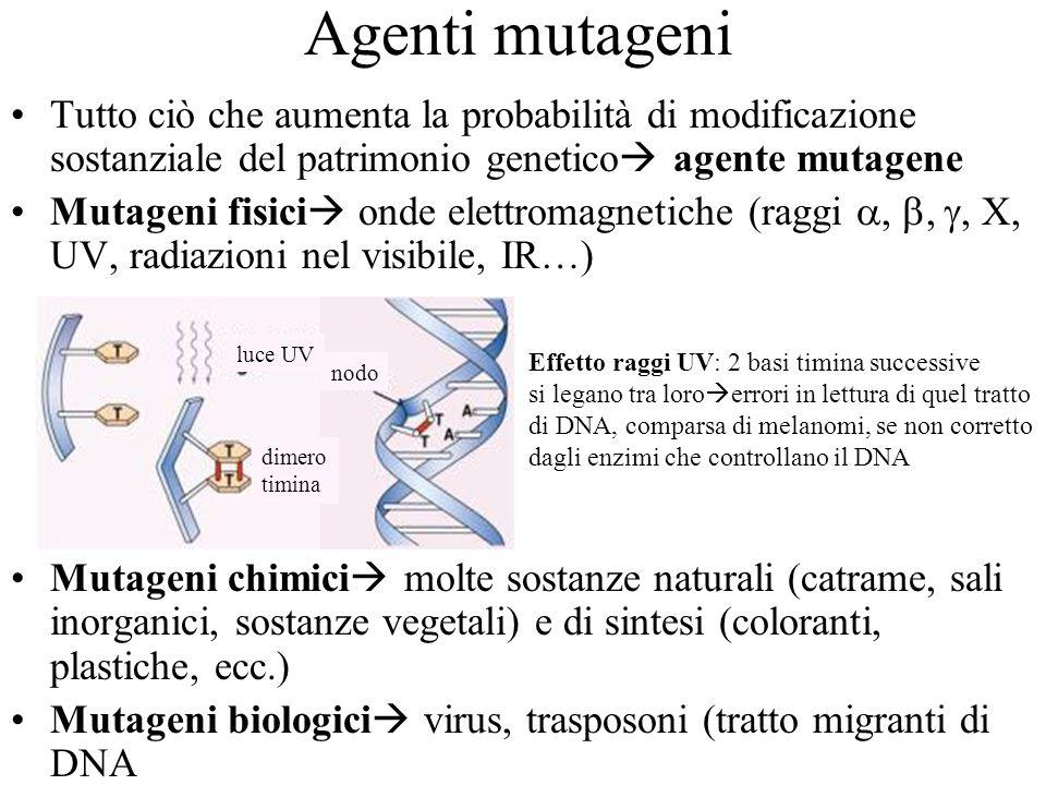 Agenti mutageni Tutto ciò che aumenta la probabilità di modificazione sostanziale del patrimonio genetico agente mutagene Mutageni fisici onde elettro