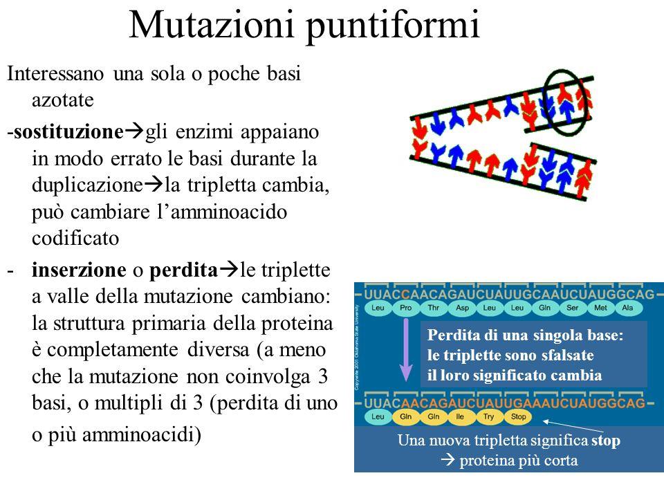 Mutazioni puntiformi Perdita di una singola base: le triplette sono sfalsate il loro significato cambia Una nuova tripletta significa stop proteina pi
