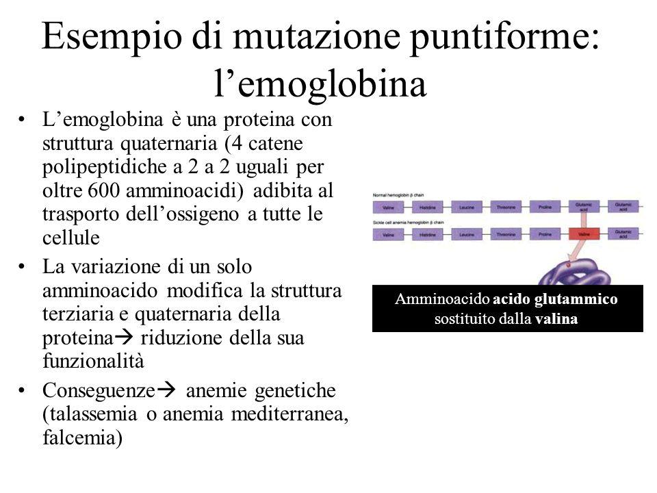 Esempio di mutazione puntiforme: lemoglobina Lemoglobina è una proteina con struttura quaternaria (4 catene polipeptidiche a 2 a 2 uguali per oltre 60