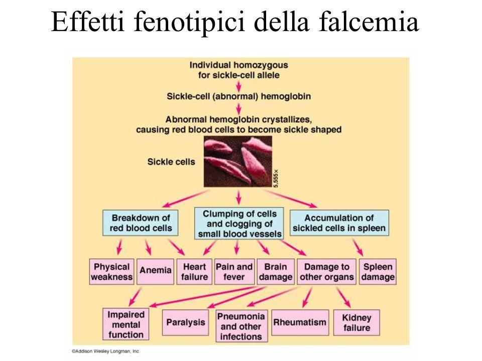 Effetti fenotipici della falcemia