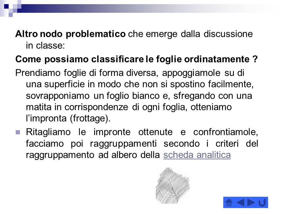 Altro nodo problematico che emerge dalla discussione in classe: Come possiamo classificare le foglie ordinatamente .