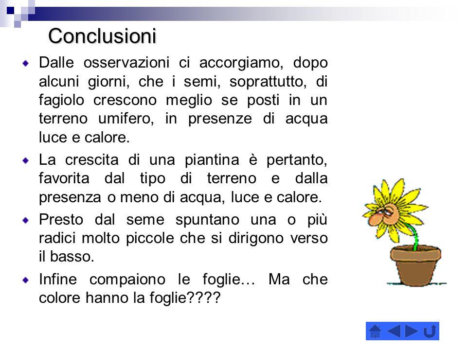 Conclusioni Conclusioni Dalle osservazioni ci accorgiamo, dopo alcuni giorni, che i semi, soprattutto, di fagiolo crescono meglio se posti in un terreno umifero, in presenze di acqua luce e calore.