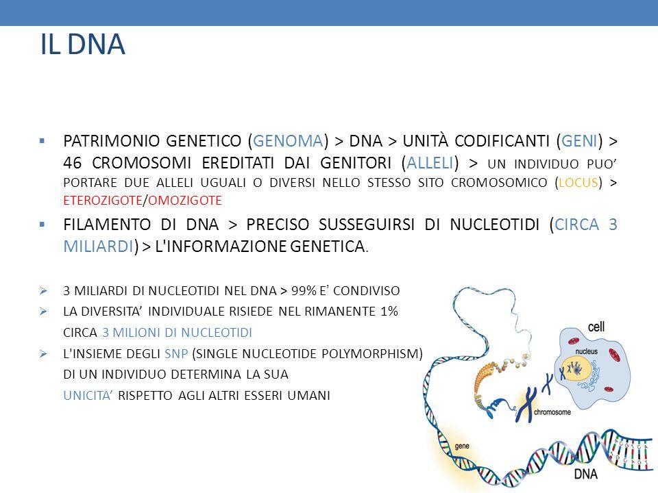 IL DNA PATRIMONIO GENETICO (GENOMA) > DNA > UNITÀ CODIFICANTI (GENI) > 46 CROMOSOMI EREDITATI DAI GENITORI (ALLELI) > UN INDIVIDUO PUO PORTARE DUE ALL