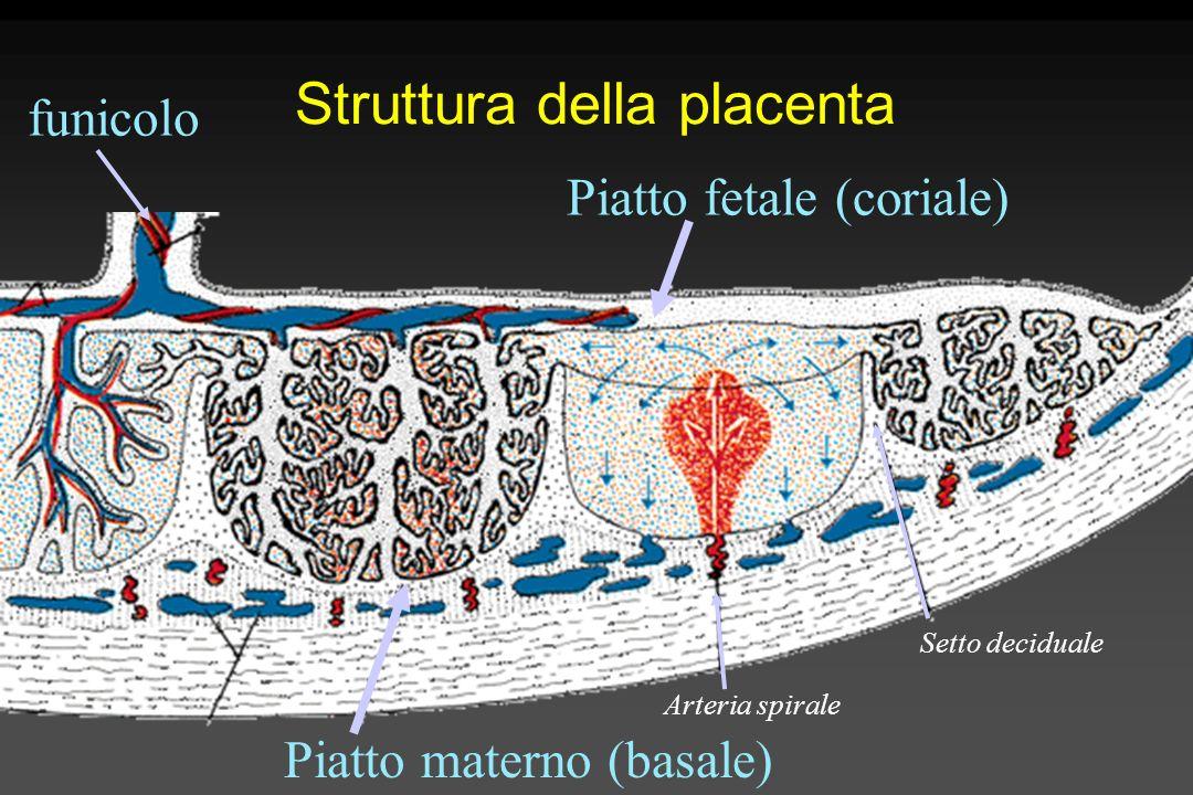 Secondamento Lato fetale Lato materno