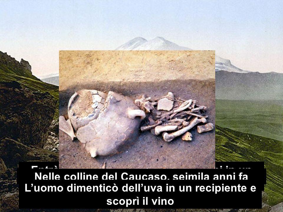 Entrò nella mente degli esseri umani in un luogo distante dalla sua collina Nelle colline del Caucaso, seimila anni fa Luomo dimenticò delluva in un recipiente e scoprì il vino