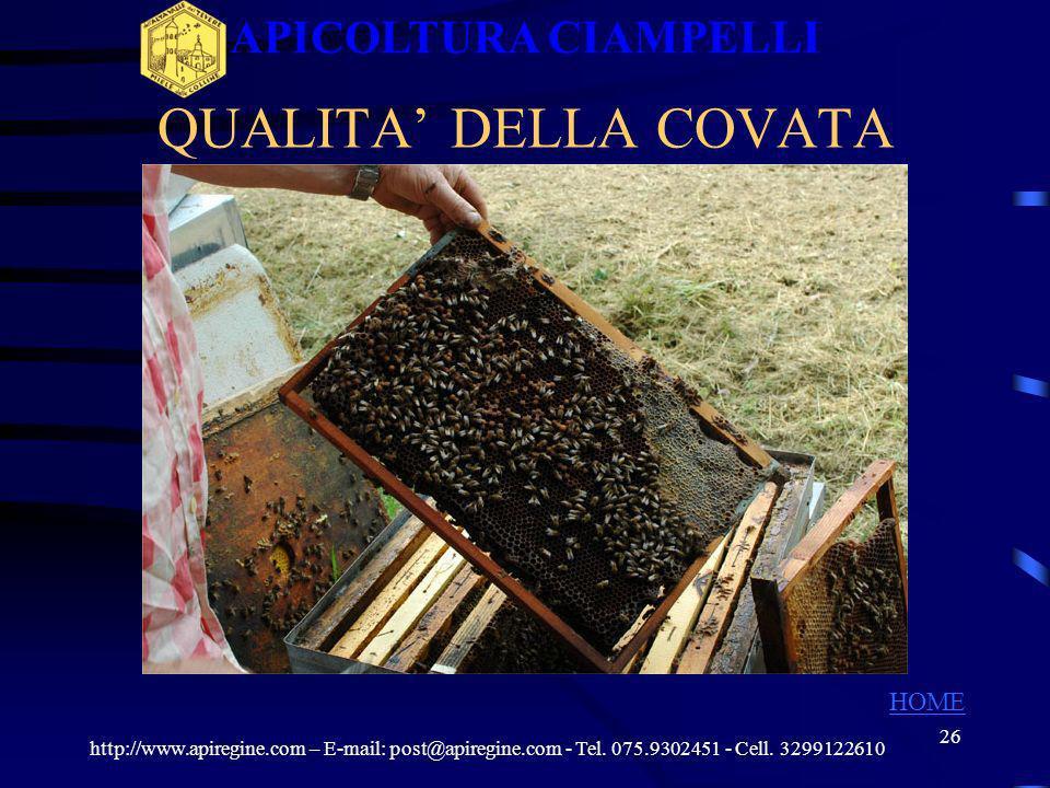 25 RACCOLTA DATI PER LA SELEZIONE Settembre 2009 Marzo 2010 Aprile 2010 Qualità covata (1-2-3) 3 Telaini di covata (1-2-3) 1 Api su telaini (1-2-3) 2