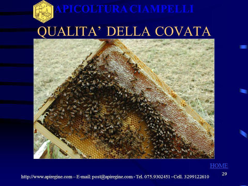 28 QUALITA DELLA COVATA http://www.apiregine.com – E-mail: post@apiregine.com - Tel. 075.9302451 - Cell. 3299122610 APICOLTURA CIAMPELLI HOME