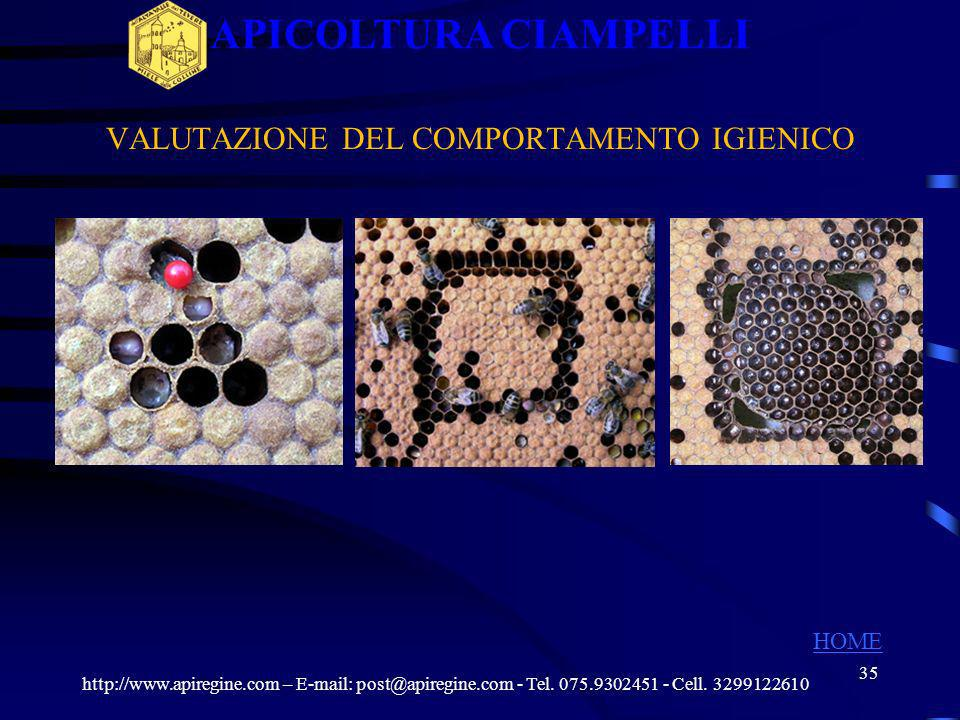 34 SELEZIONE COMPORTAMENTO IGIENICO http://www.apiregine.com – E-mail: post@apiregine.com - Tel. 075.9302451 - Cell. 3299122610 APICOLTURA CIAMPELLI H