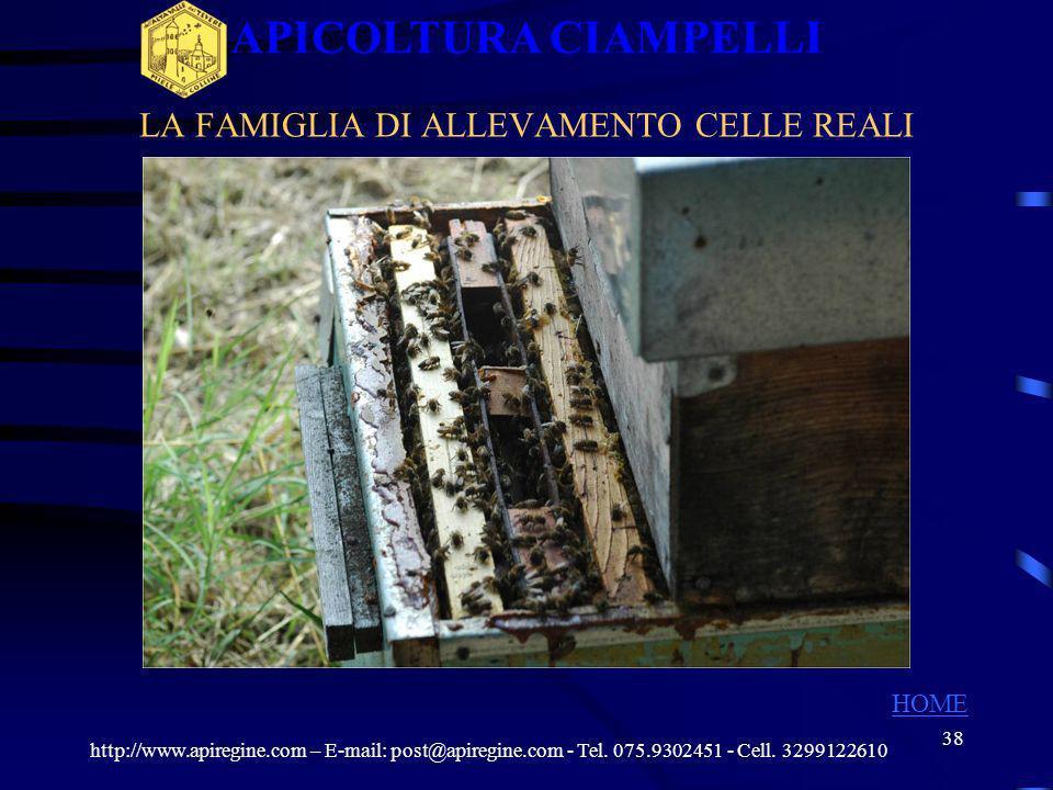37 LA FAMIGLIA DI ALLEVAMENTO CELLE REALI http://www.apiregine.com – E-mail: post@apiregine.com - Tel. 075.9302451 - Cell. 3299122610 APICOLTURA CIAMP