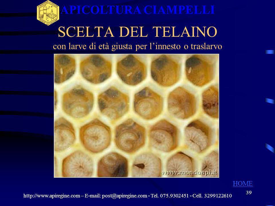38 LA FAMIGLIA DI ALLEVAMENTO CELLE REALI http://www.apiregine.com – E-mail: post@apiregine.com - Tel. 075.9302451 - Cell. 3299122610 APICOLTURA CIAMP
