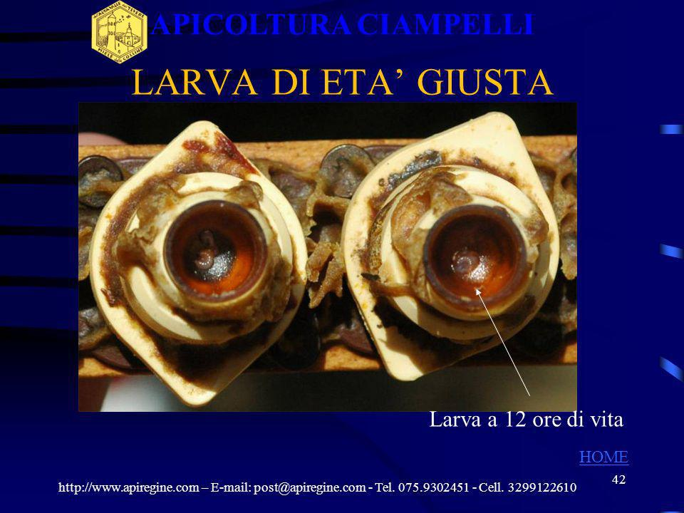 41 LARVE NEI CUPOLINI http://www.apiregine.com – E-mail: post@apiregine.com - Tel. 075.9302451 - Cell. 3299122610 APICOLTURA CIAMPELLI HOME