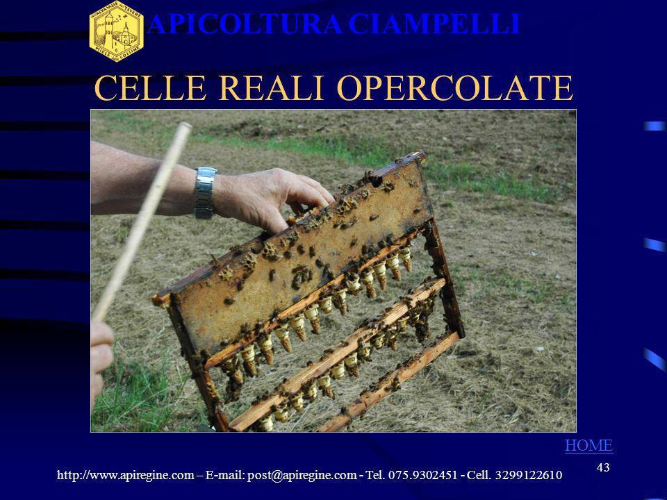 42 LARVA DI ETA GIUSTA Larva a 12 ore di vita http://www.apiregine.com – E-mail: post@apiregine.com - Tel. 075.9302451 - Cell. 3299122610 APICOLTURA C