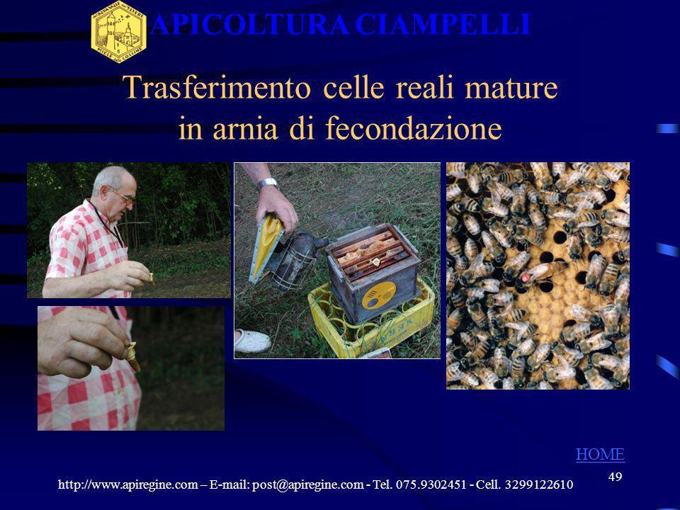 48 Preparazione alveari per la fecondazione http://www.apiregine.com – E-mail: post@apiregine.com - Tel. 075.9302451 - Cell. 3299122610 APICOLTURA CIA