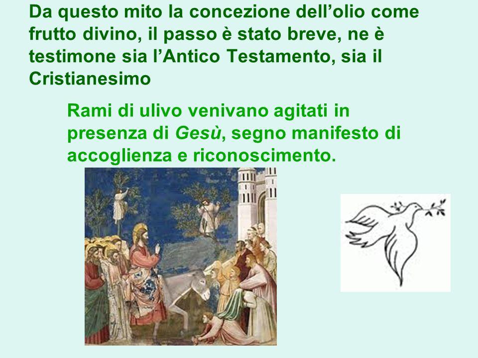 Da questo mito la concezione dellolio come frutto divino, il passo è stato breve, ne è testimone sia lAntico Testamento, sia il Cristianesimo Rami di