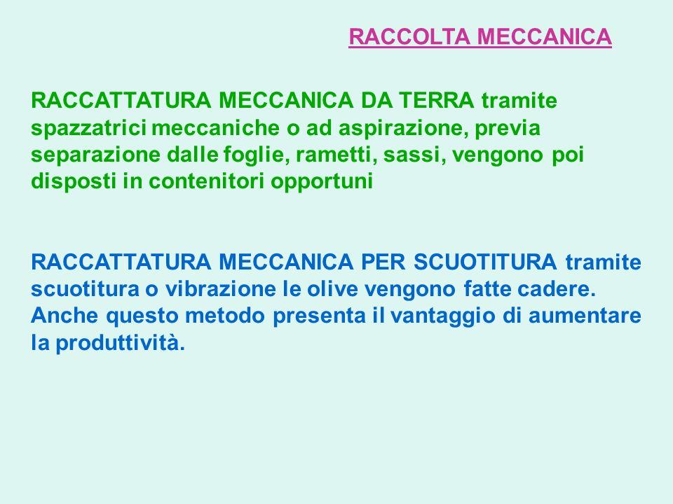 RACCOLTA MECCANICA RACCATTATURA MECCANICA DA TERRA tramite spazzatrici meccaniche o ad aspirazione, previa separazione dalle foglie, rametti, sassi, v