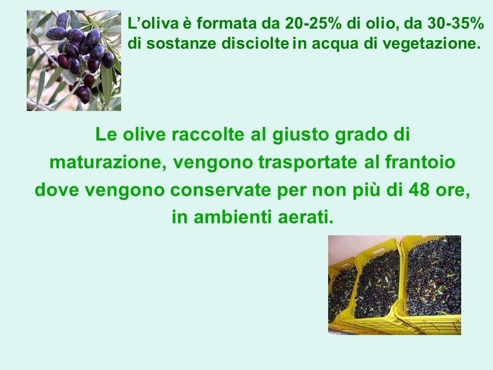 Le olive raccolte al giusto grado di maturazione, vengono trasportate al frantoio dove vengono conservate per non più di 48 ore, in ambienti aerati. L
