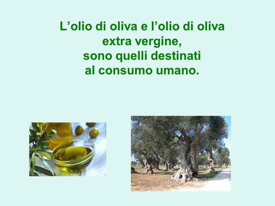 Lolio di oliva e lolio di oliva extra vergine, sono quelli destinati al consumo umano.