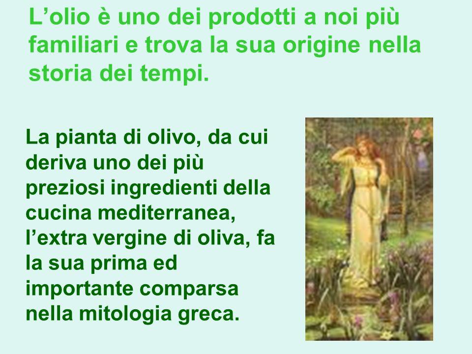 Lolio è uno dei prodotti a noi più familiari e trova la sua origine nella storia dei tempi. La pianta di olivo, da cui deriva uno dei più preziosi ing