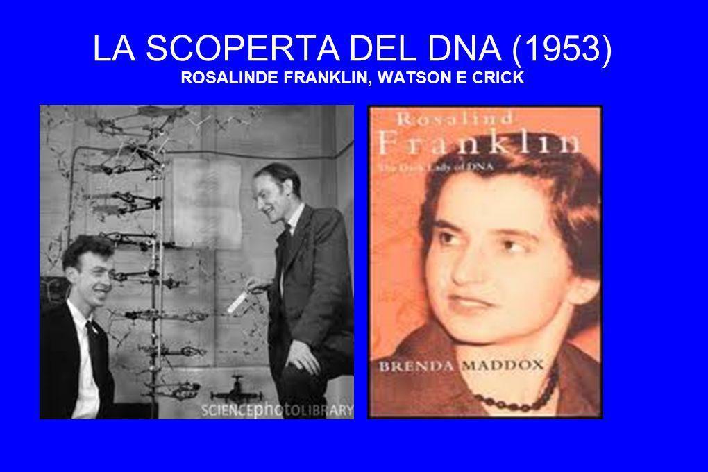 LA SCOPERTA DEL DNA (1953) ROSALINDE FRANKLIN, WATSON E CRICK