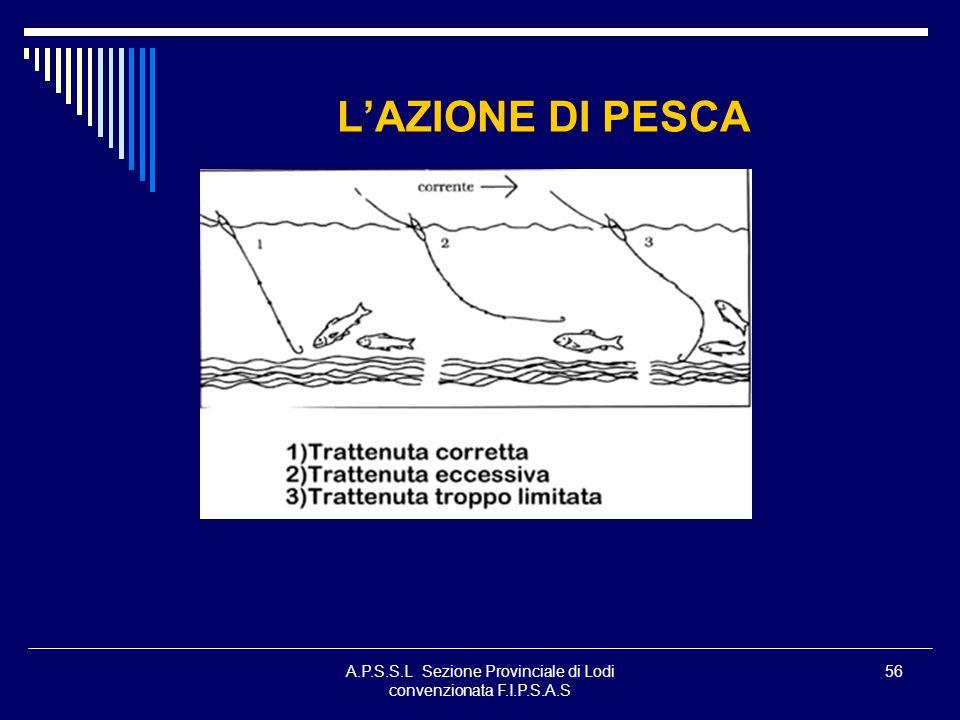 A.P.S.S.L Sezione Provinciale di Lodi convenzionata F.I.P.S.A.S 56 LAZIONE DI PESCA