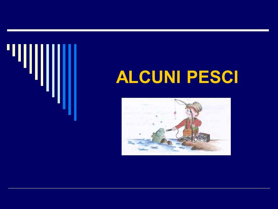 ALCUNI PESCI
