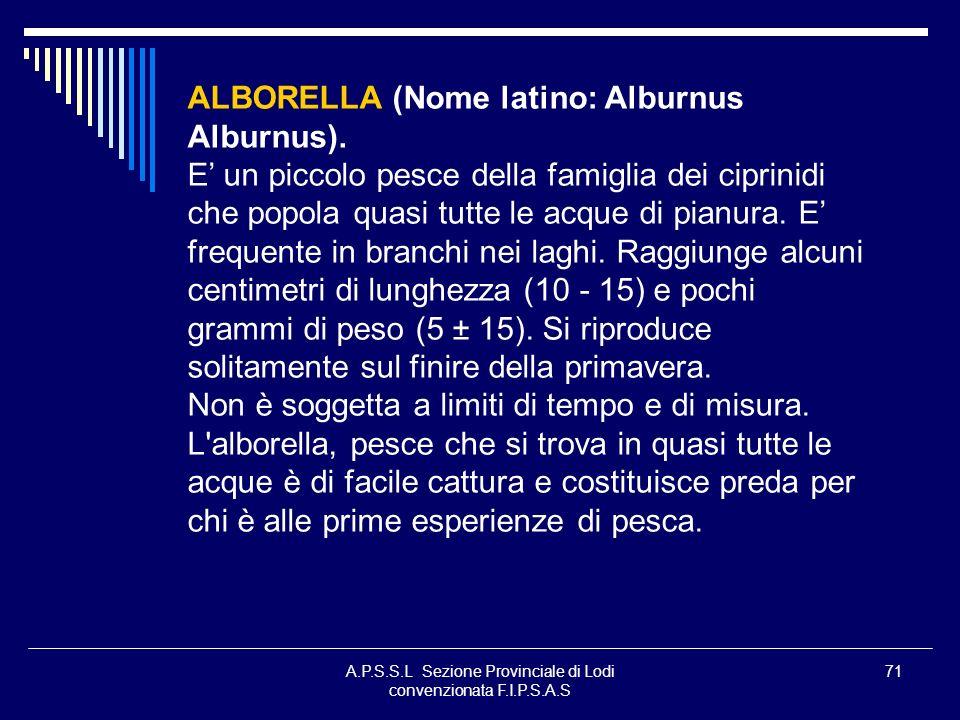 A.P.S.S.L Sezione Provinciale di Lodi convenzionata F.I.P.S.A.S 71 ALBORELLA (Nome latino: Alburnus Alburnus). E un piccolo pesce della famiglia dei c