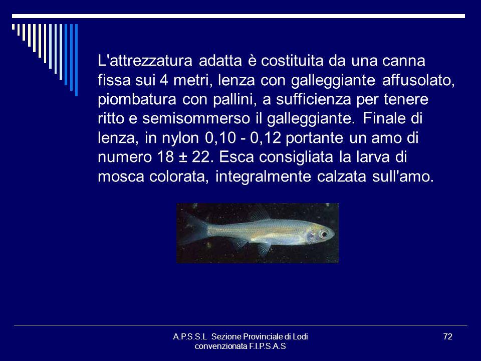 A.P.S.S.L Sezione Provinciale di Lodi convenzionata F.I.P.S.A.S 72 L'attrezzatura adatta è costituita da una canna fissa sui 4 metri, lenza con galleg