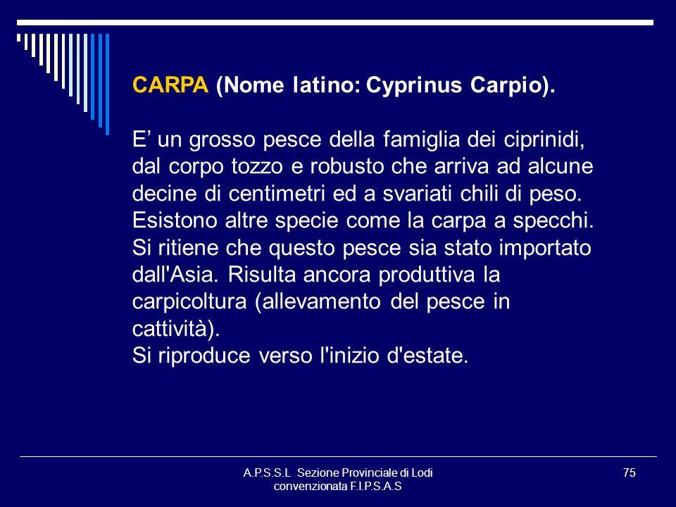 A.P.S.S.L Sezione Provinciale di Lodi convenzionata F.I.P.S.A.S 75 CARPA (Nome latino: Cyprinus Carpio). E un grosso pesce della famiglia dei ciprinid