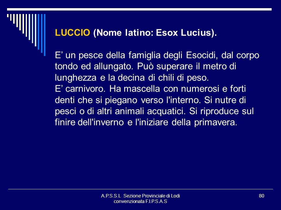 A.P.S.S.L Sezione Provinciale di Lodi convenzionata F.I.P.S.A.S 80 LUCCIO (Nome latino: Esox Lucius). E un pesce della famiglia degli Esocidi, dal cor
