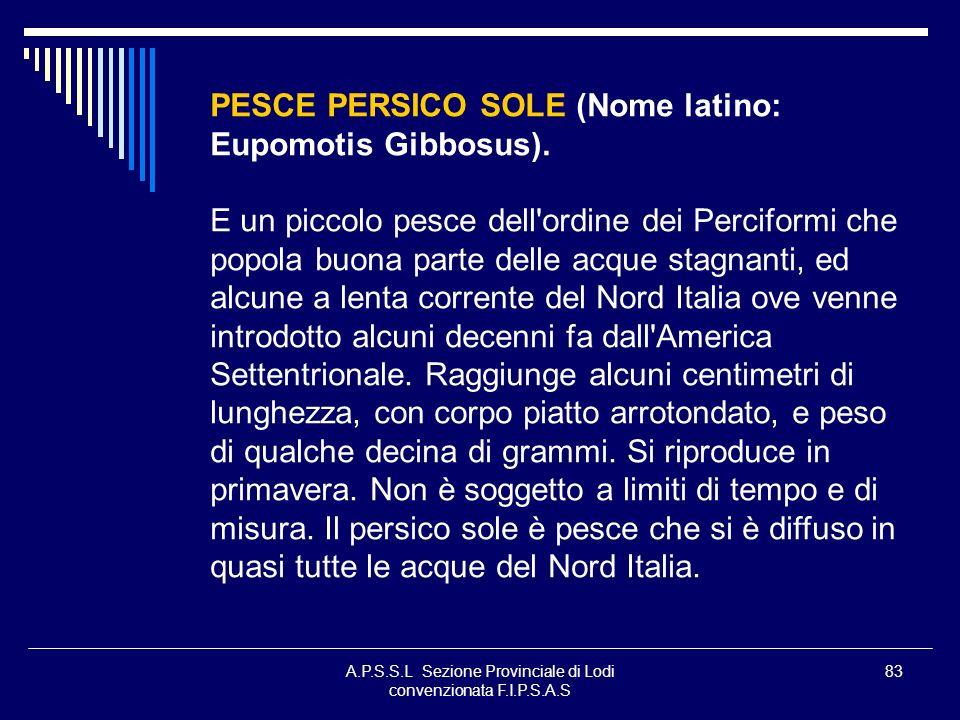 A.P.S.S.L Sezione Provinciale di Lodi convenzionata F.I.P.S.A.S 83 PESCE PERSICO SOLE (Nome latino: Eupomotis Gibbosus). E un piccolo pesce dell'ordin