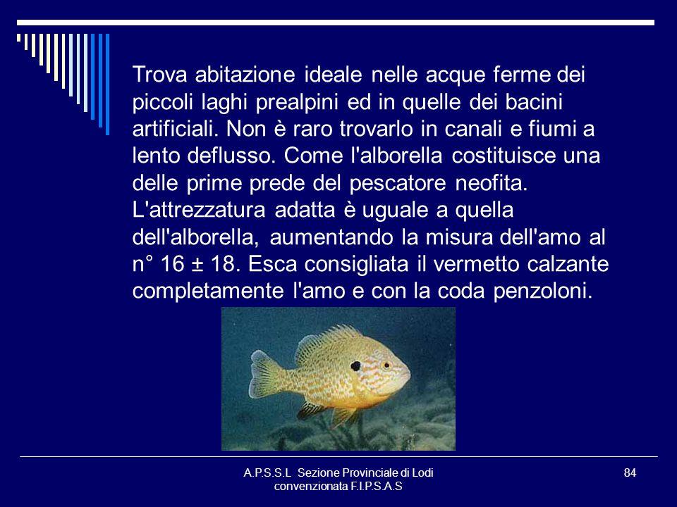 A.P.S.S.L Sezione Provinciale di Lodi convenzionata F.I.P.S.A.S 84 Trova abitazione ideale nelle acque ferme dei piccoli laghi prealpini ed in quelle