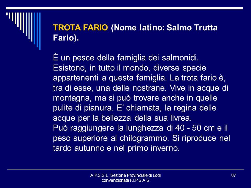 A.P.S.S.L Sezione Provinciale di Lodi convenzionata F.I.P.S.A.S 87 TROTA FARIO (Nome latino: Salmo Trutta Fario). È un pesce della famiglia dei salmon
