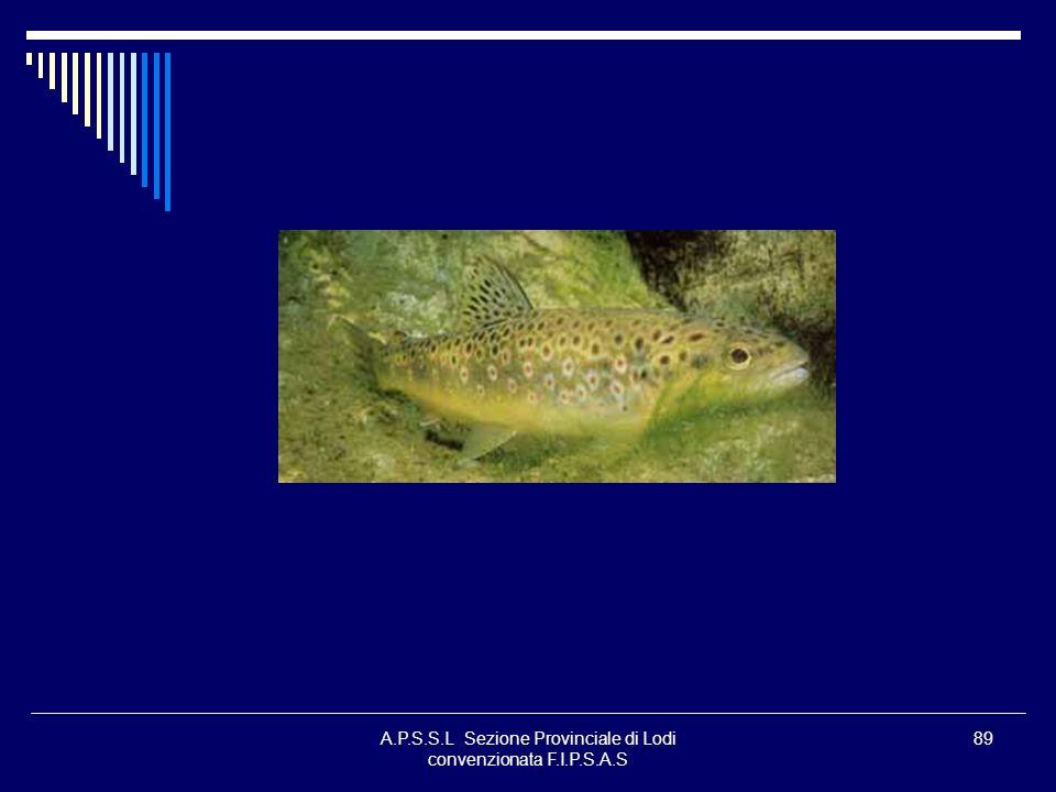 A.P.S.S.L Sezione Provinciale di Lodi convenzionata F.I.P.S.A.S 89