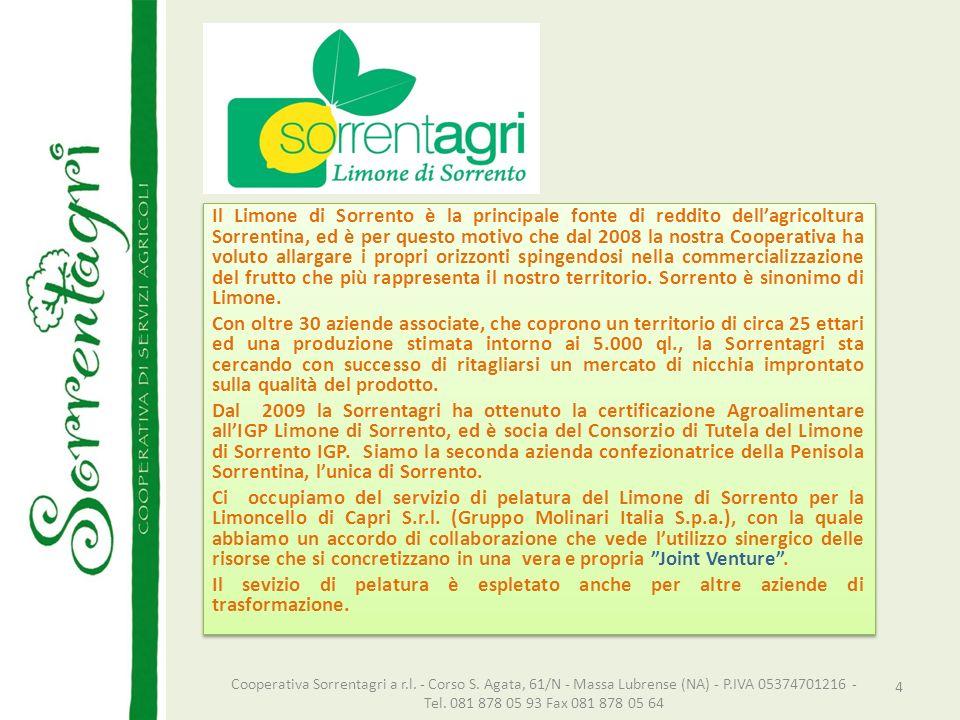 Il Limone di Sorrento è la principale fonte di reddito dellagricoltura Sorrentina, ed è per questo motivo che dal 2008 la nostra Cooperativa ha voluto