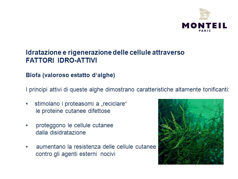 Idratazione e rigenerazione delle cellule attraverso FATTORI IDRO-ATTIVI Biofa (valoroso estatto dalghe) I principi attivi di queste alghe dimostrano