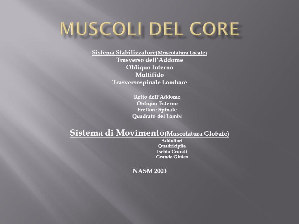 Inserzioni Muscolari Erettore Spinale Profondo Multifidi Trasverso Addominale Obliquo Interno Grande Gluteo Gran Dorsale Quadrato dei Lombi