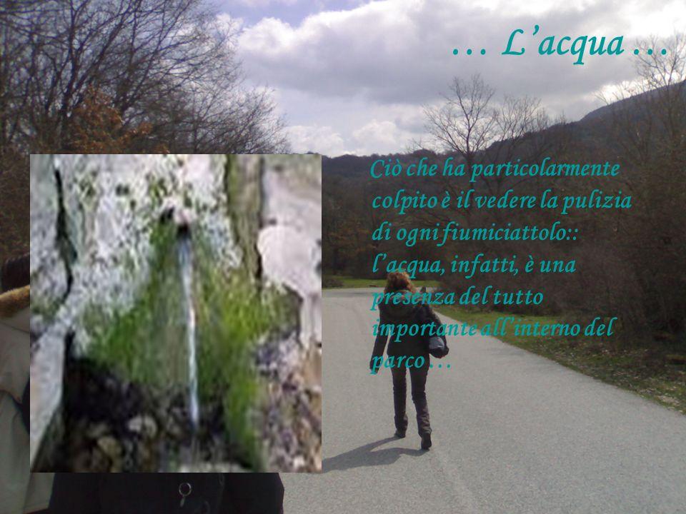 … Lacqua … Ciò che ha particolarmente colpito è il vedere la pulizia di ogni fiumiciattolo:: lacqua, infatti, è una presenza del tutto importante allinterno del parco …