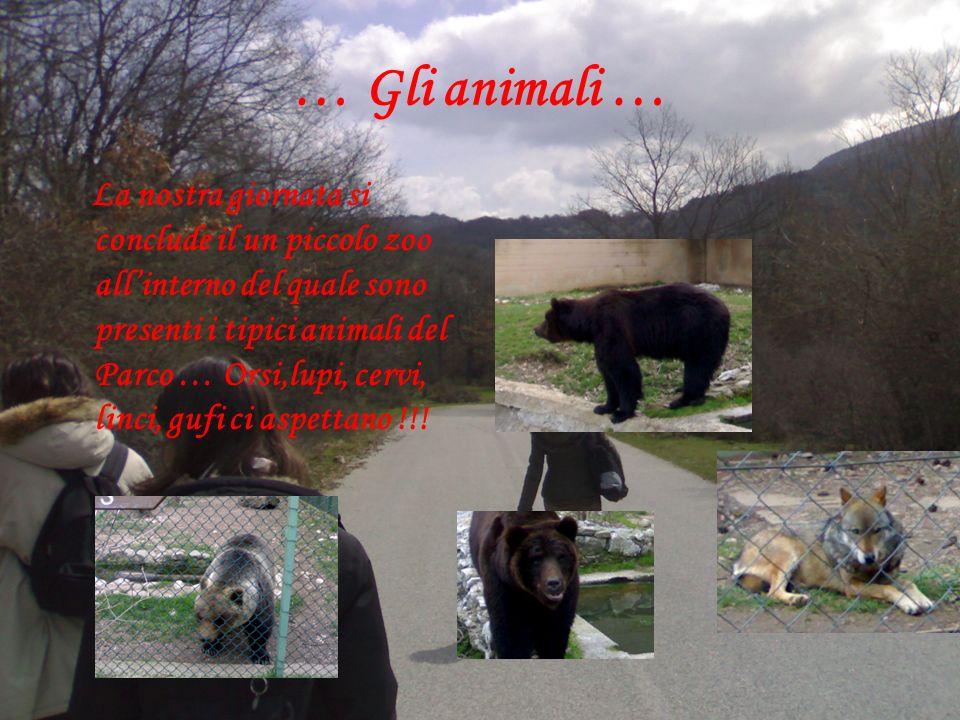 … Gli animali … La nostra giornata si conclude il un piccolo zoo allinterno del quale sono presenti i tipici animali del Parco … Orsi,lupi, cervi, linci, gufi ci aspettano !!!