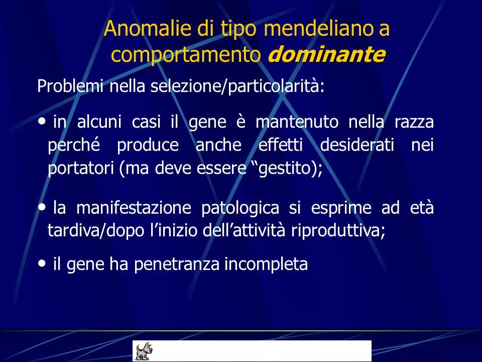 Problemi nella selezione/particolarità: in alcuni casi il gene è mantenuto nella razza perché produce anche effetti desiderati nei portatori (ma deve