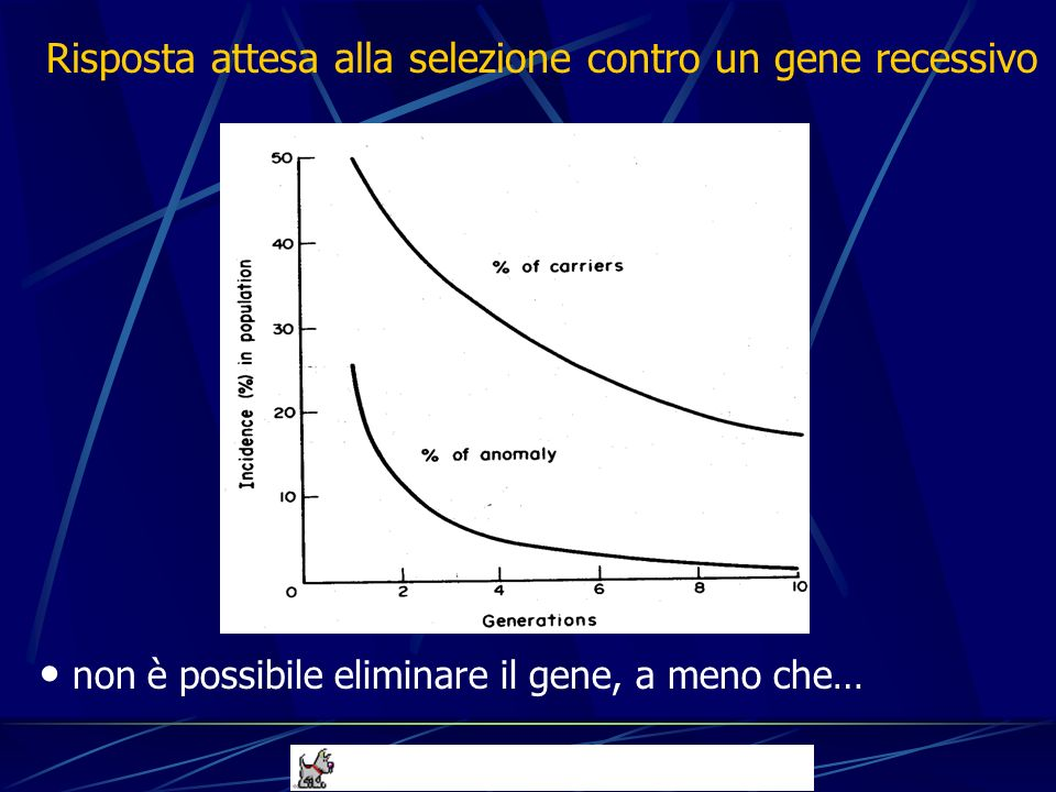 Risposta attesa alla selezione contro un gene recessivo non è possibile eliminare il gene, a meno che…